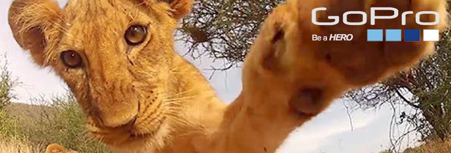 Съёмка животных на GoPro